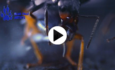 Acid Splash Defense or Bombardier Beetle