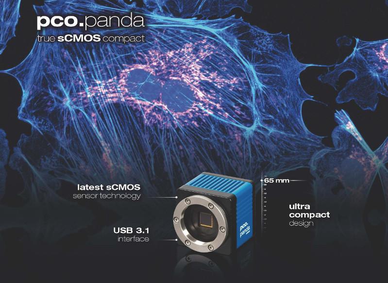 blue pco.panda flyer side 1 keyfacts